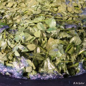 What Is Indigo and How Is It Made Indigo Leaves Fermented Foam
