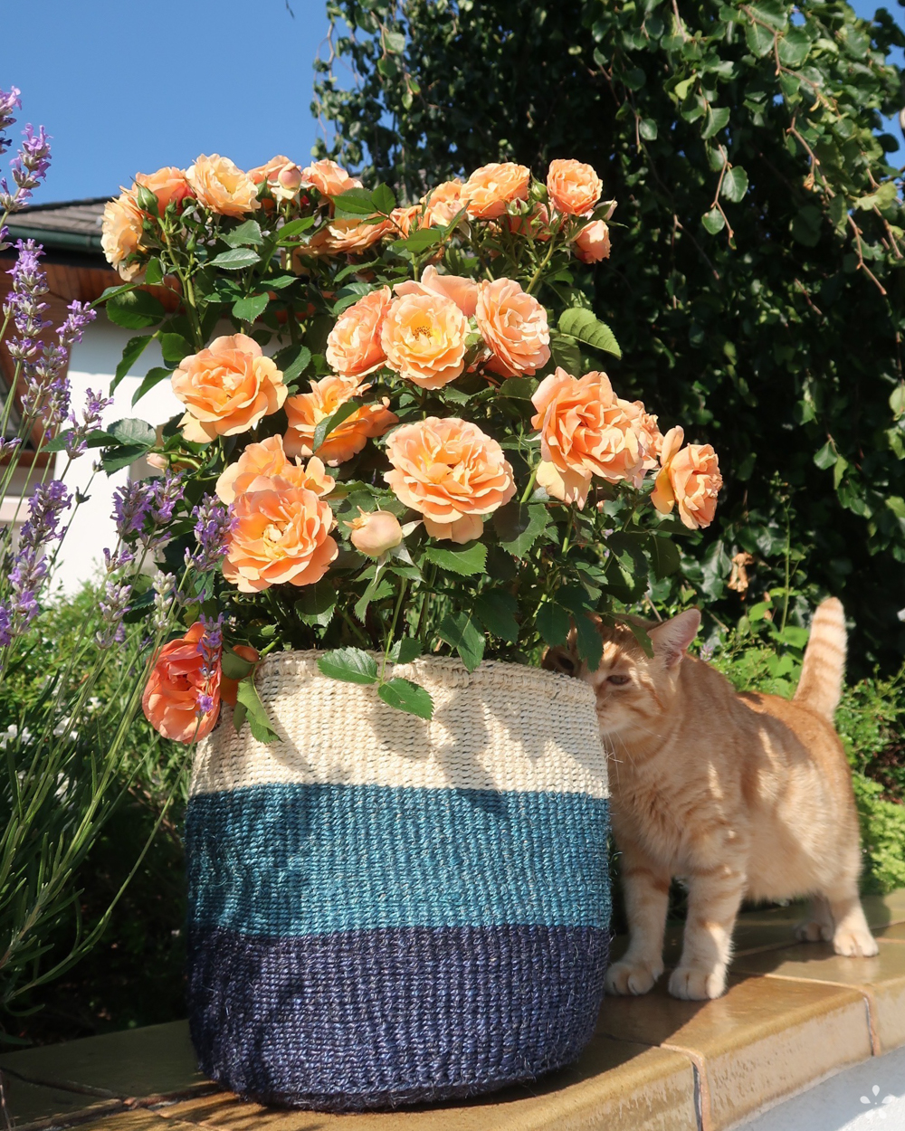 Handmade Sisal Basket White Blue Blocks Orange Rose Cat Smelling